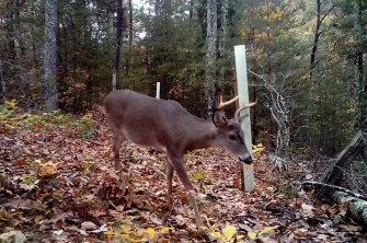 Nick-Davis-trail-cam-deer-1